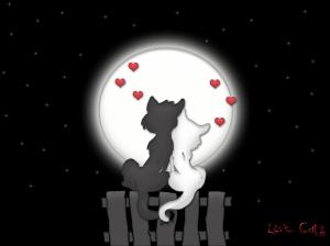 love_moon_cats1